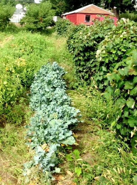 Vintage garden  www.mytributejournal.com
