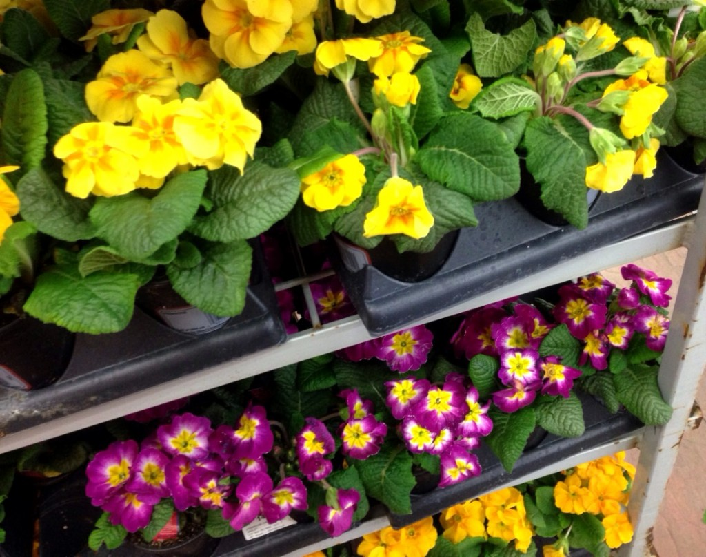 Spring Flowers! www.mytributejournal.com