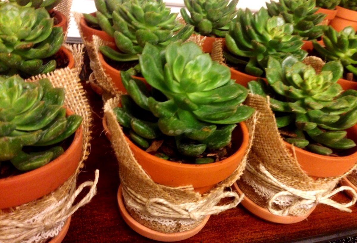 Succulent gifts! www.mytributejournal.com
