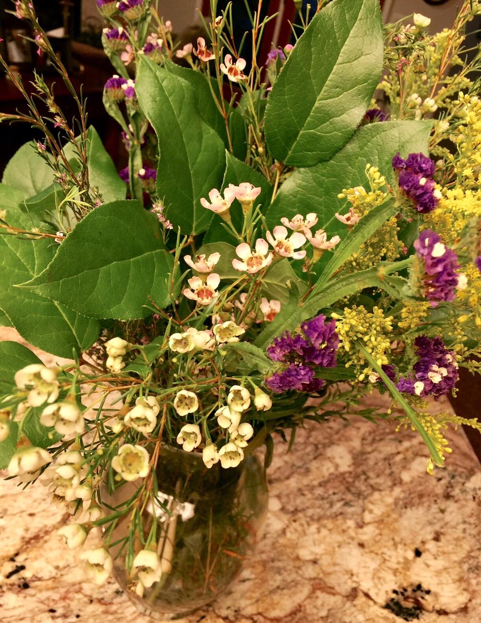 Garden therapy hardy houseplants tribute journal - Hardy houseplants ...