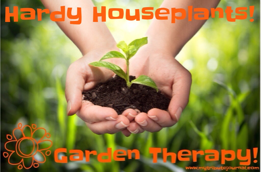 Garden Therapy! Hardy Houseplants!
