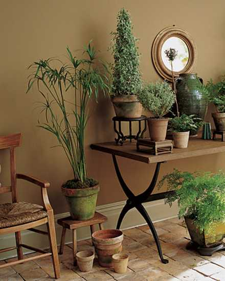 Decorating Dilemma House Plants: Garden Therapy! Hardy Houseplants!