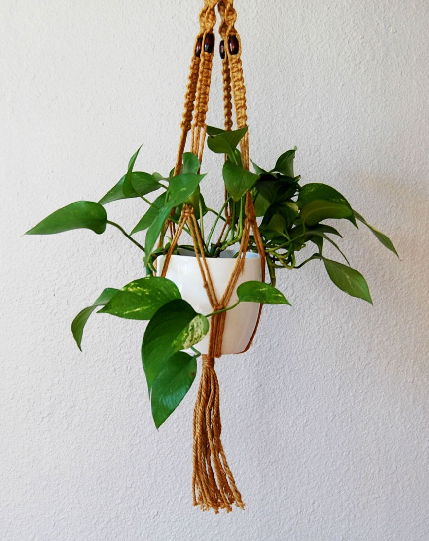 Pothos plant in macreme plant holder www.mytributejournal.com