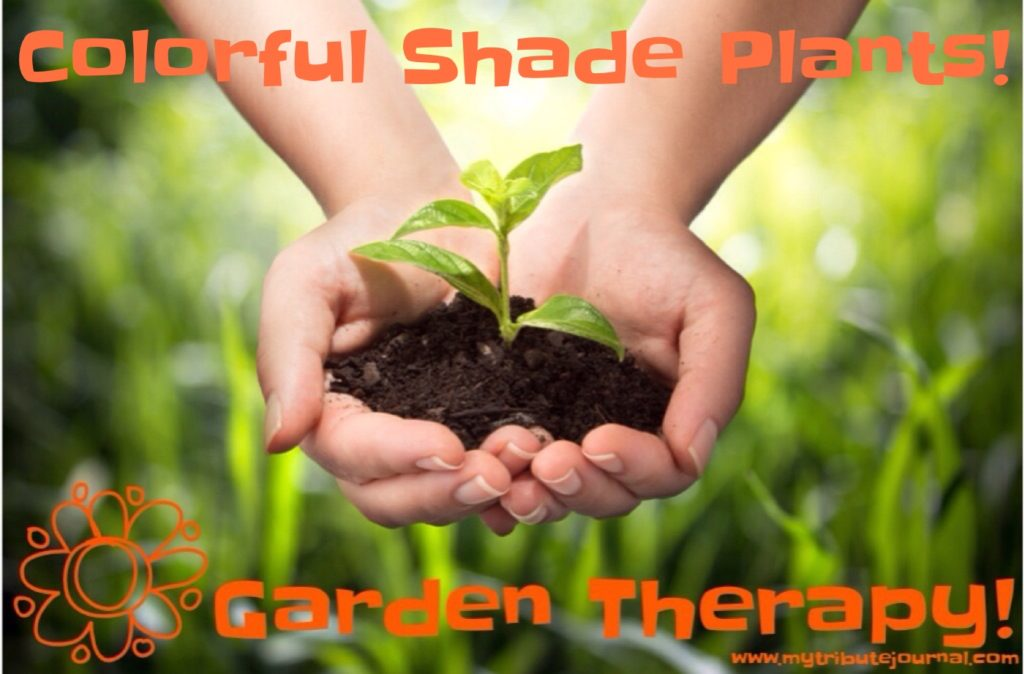Colorful Shade Plants!