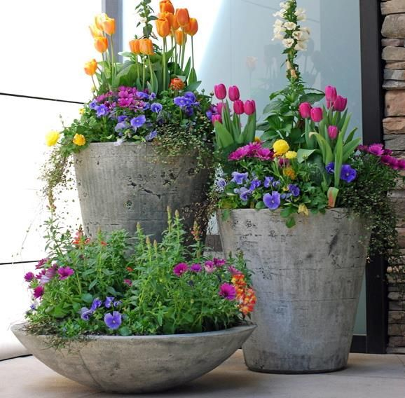 Maintaining spring flower pots.