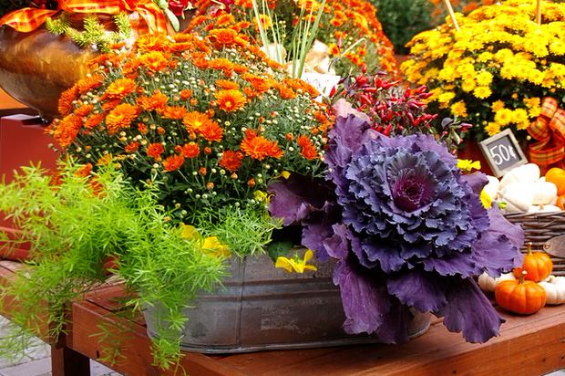 Fall flower pots.