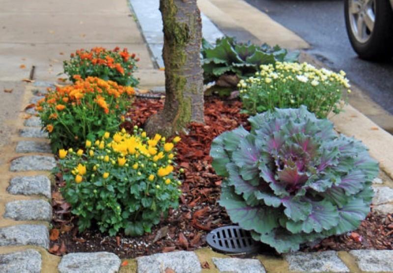 Fall plants.