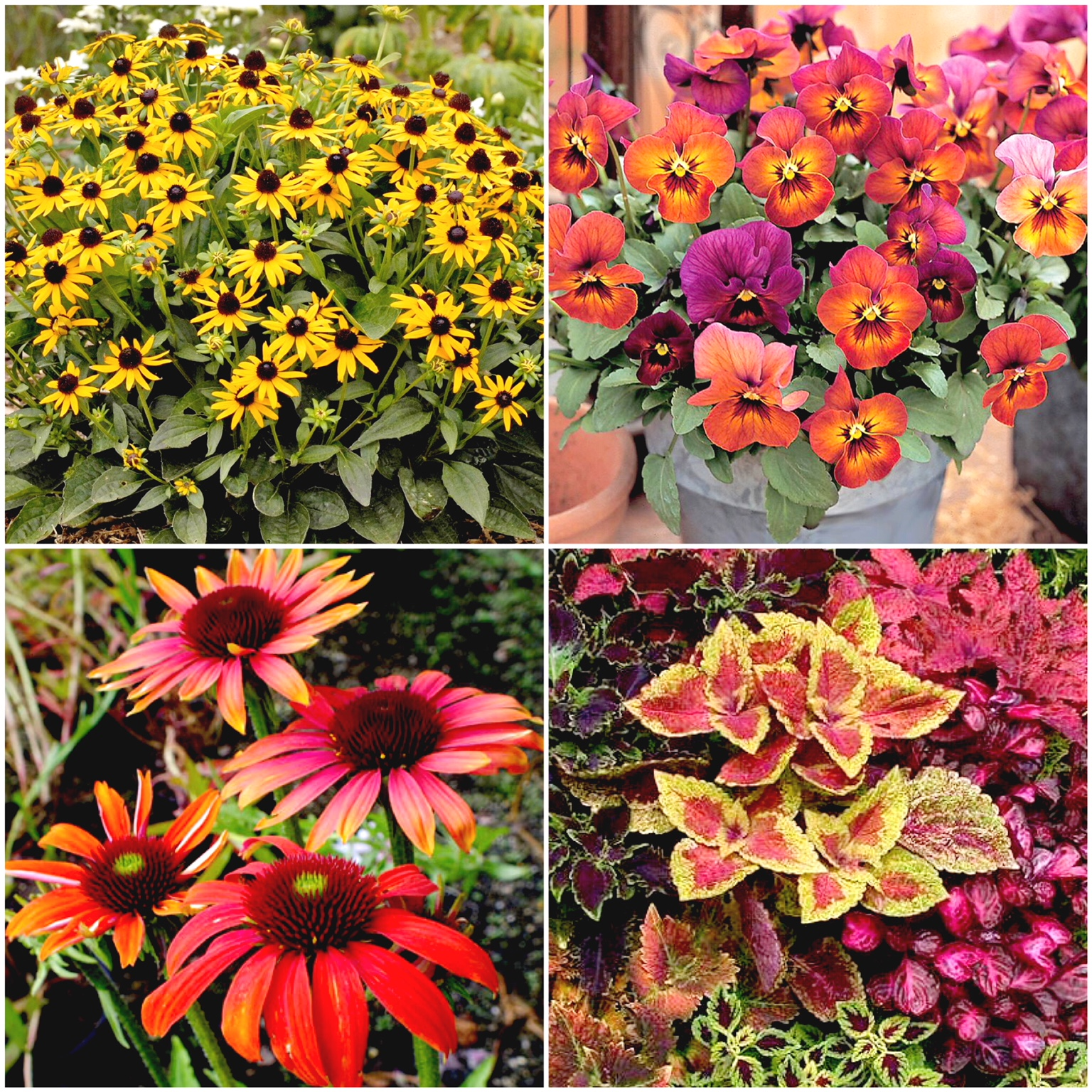 Garden Therapy! Fall Foliage!